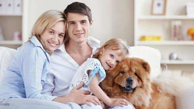 Wills & Trusts dog-young-family Direct Wills Saltash